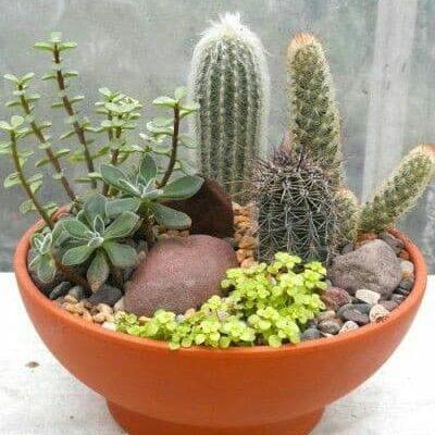 jardín de cactus en base de barro