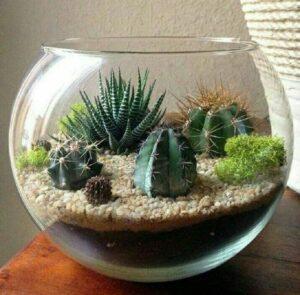 Terrario de suculentas y cactus en pecera de vidrio