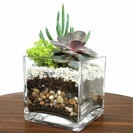 cactus y suculentas en cubo de vidrio