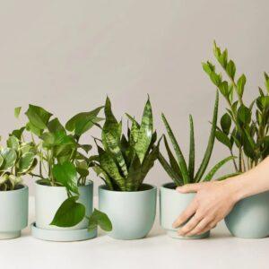 Plantas (Orquídeas, Cactus y Suculentas)