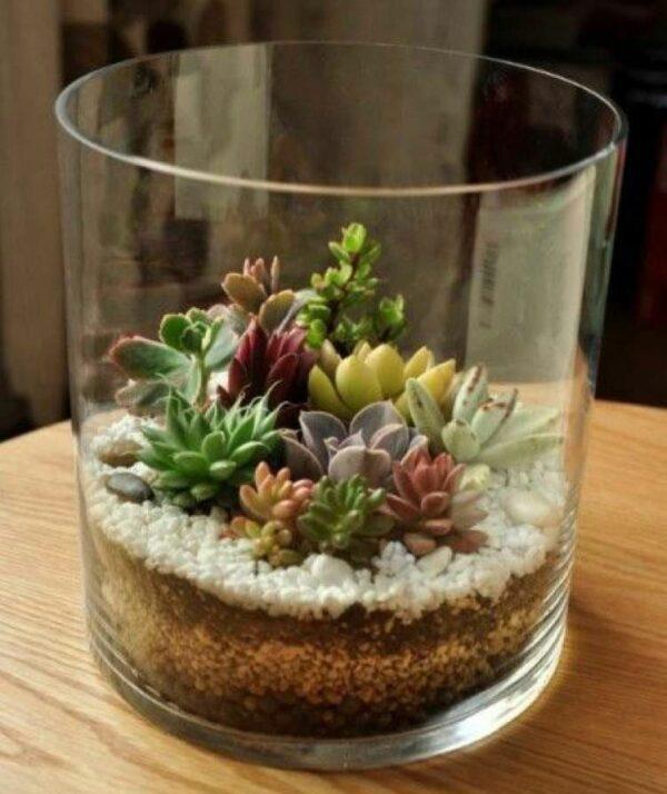 Terrario de cactus y suculentas en cilindro de vidrio
