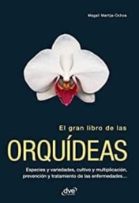 orquídeas phalaenopsis,cuidados básicos